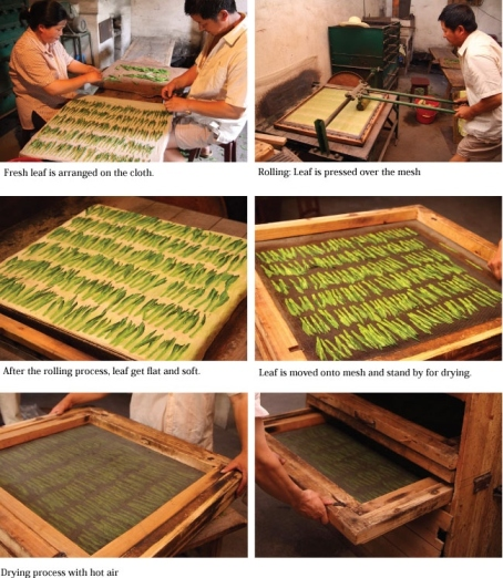 tai ping hou kui green tea processing